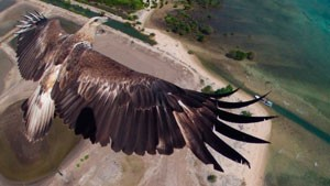avia-dron-i-ptica-1